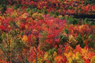peak fall colors eastland park hotel leaf peepers welcome