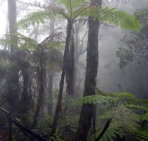 Canopy Fogging Definition by Cloud Forest Wikipedia