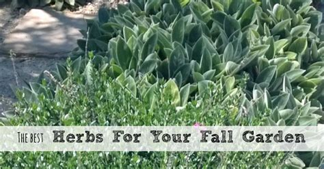 fall herb garden the best herbs for your fall garden need to