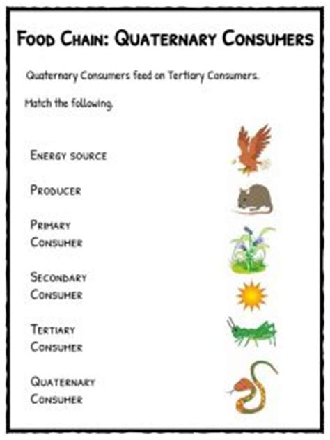 3 2 Energy Producers And Consumers Worksheet Answer Key
