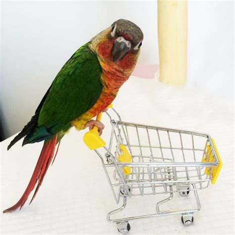pet birds shop reviews online shopping pet birds shop