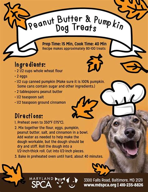 pumpkin treats for dogs 7 benefits of pumpkin for dogs chasing tales