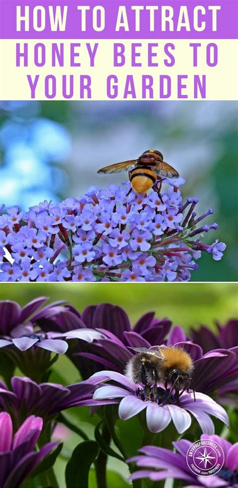 26765 Best Homesteading Images On Pinterest How To Raise Bees In Your Backyard