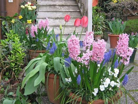 coltivare tulipani in vaso bulbi vaso bulbi bulbi vaso bulbi