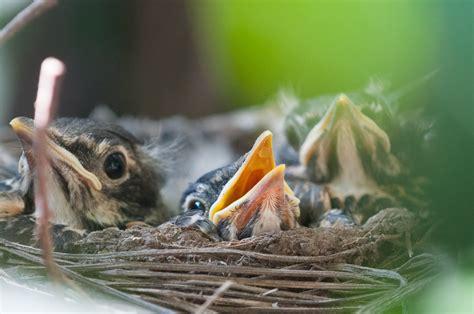 baby robin growth dan sherree patrick