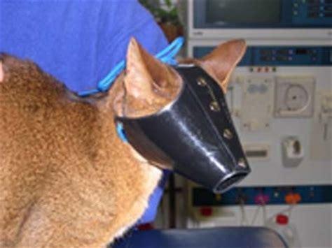 muzzle petco small muzzle cat breeds picture
