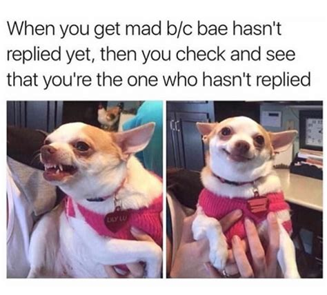 dog mood swings 10 dog memes today 4 dog knows who is the best driver