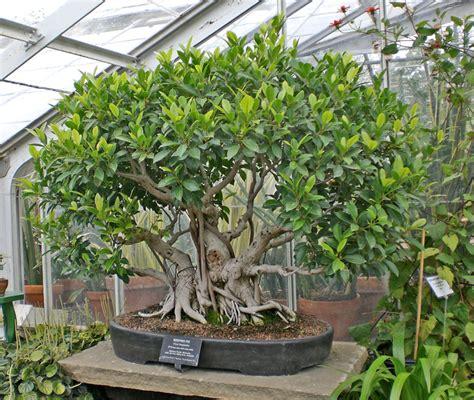 indoor treesplants project idea environmental geography