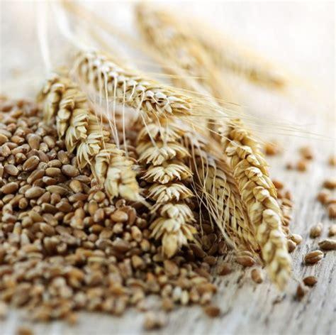 whole grain rye 50 lb amish organic seven grain mix 25 lb bulk organic grains