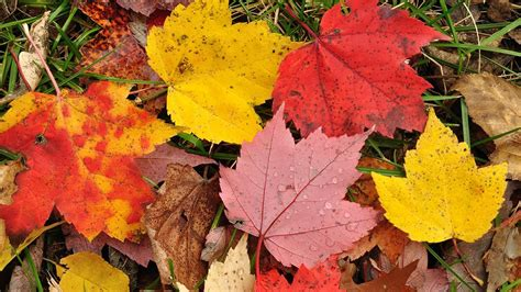 why do autumn leaves change color myscienceacademy