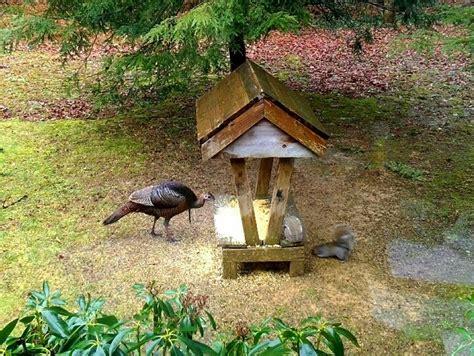 Turkey Feeder Design tom turkey visits our feeder animals i well