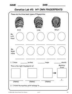 classification pattern in reading forensic science worksheets lesupercoin printables worksheets