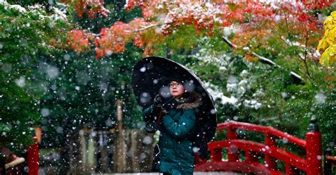 I Mentioned Earlier In The Week That I Would Write by Line Adds Snowflakes After Tokyo S Early Snowfall In