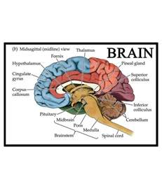 Home Decor Items In India av styles textured human brain knowledgeful diagram for