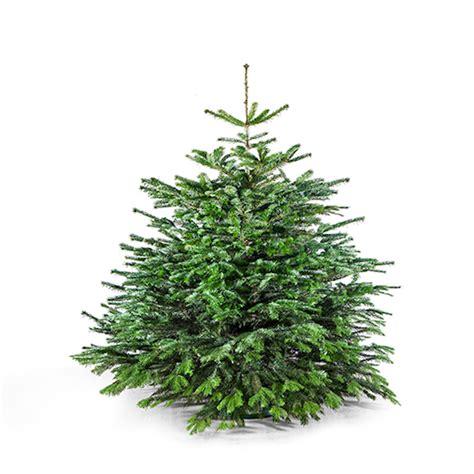 weihnachtsbaum 150 cm der charmante leander meine tanne