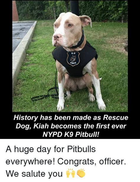 Pitbull Puppy Meme - 25 best memes about pitbulls pitbulls memes