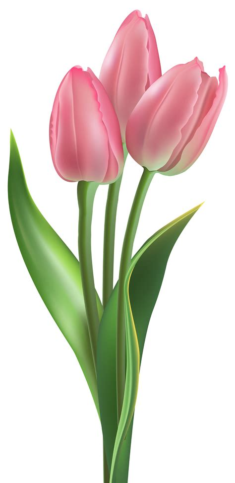 Aksesona Anting Flower Tulip Gold White Transparent soft pink tulips png clipart image gallery yopriceville high quality images and transparent