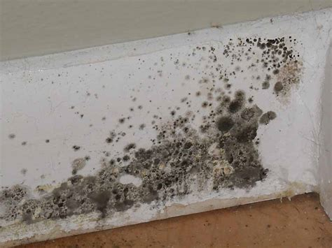 mold growth in bathroom mold inspection what is mold