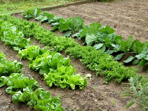 hort enciams bordas jardineria garden center bordas