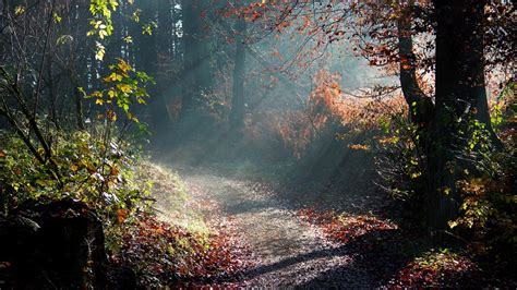 beautiful forest path pictures weneedfun