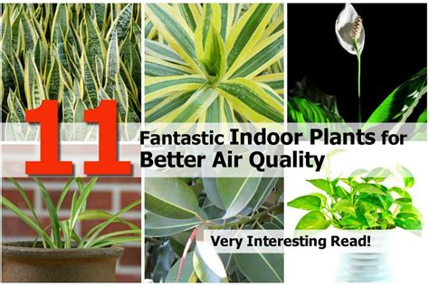 best plants for air quality 11 fantastic indoor plants for better air quality