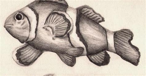 sketsa ikan dengan pensil gambar pemandangan