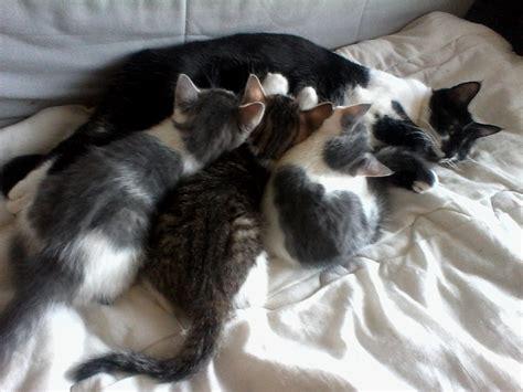 chat on donne chaton gratuit 64400 oloron sainte don