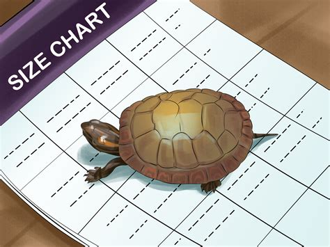 how to tell a s age how to tell the age of a box turtle reptile gallery