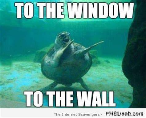 Funny Turtle Memes - thirsty thursday meme