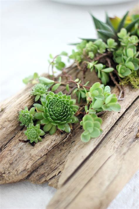 Driftwood Planter by Diy Succulent Driftwood Planter Ehow