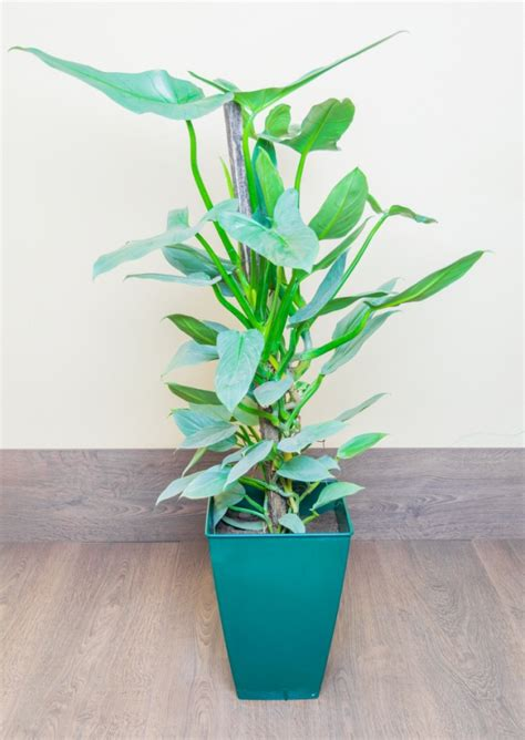 easy houseplants 10 easy houseplants anyone can grow thegoodstuff