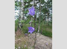 Kuvia kasveista 2007 08