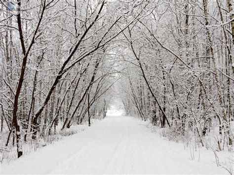 imagenes de invierno reales paisajes invernales