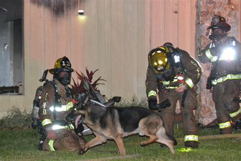 the family puppy german shepherd helps rescue children from burning home wfla