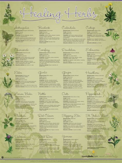 herbal supplement chart related keywords herbal supplement chart long tail keywords keywordsking healing herbs wall chart learningherbs stuff to create