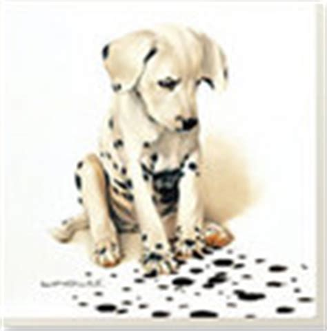 dalmatian puppies for sale in ny dalmatian puppies for sale ny nj