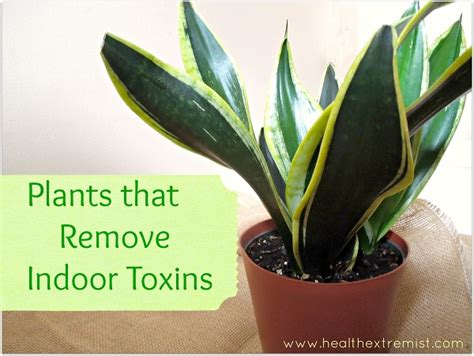 best houseplants for clean air 6 indoor plants that clean the air in your home