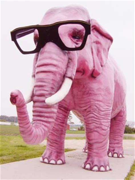 the pink elephant in the room scurvy elephant farm why scurvy elephant you ask