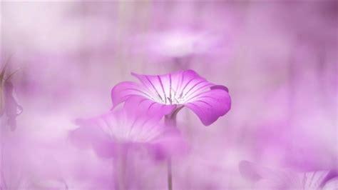 flower wallpaper for macbook pro purple flowers tumblr mac wallpaper download free mac