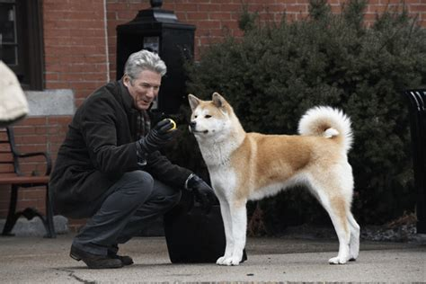 what of was hachi just looking for a like mine hachi a s tale ebert did it better