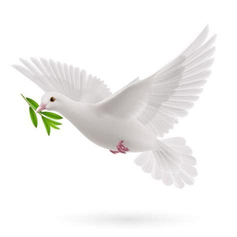 imagenes de palomas blancas en vuelo la paloma de la paz ent 233 rate como naci 243 este s 237 mbolo la