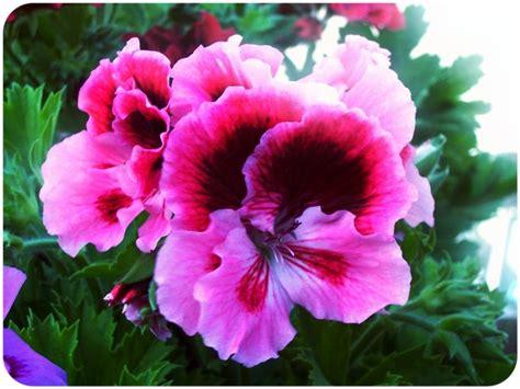 fiori semplici 17 migliori idee su fiori semplici su collana