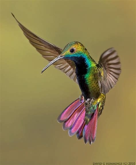 colorful humming bird canvas print canvas art by image