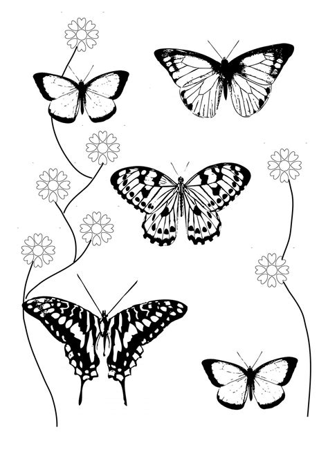 coloring pages of small butterflies small butterfly coloring pages coloring pages ideas