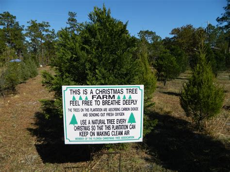 christmas tree farms pensacola awesome picture of tree farms florida fabulous homes interior design ideas
