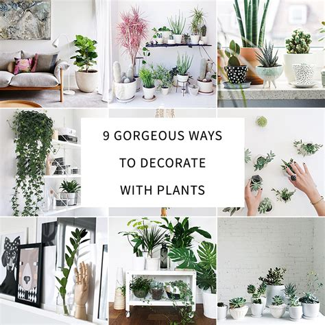 home decorating plants 9 gorgeous ways to decorate with plants melyssa griffin