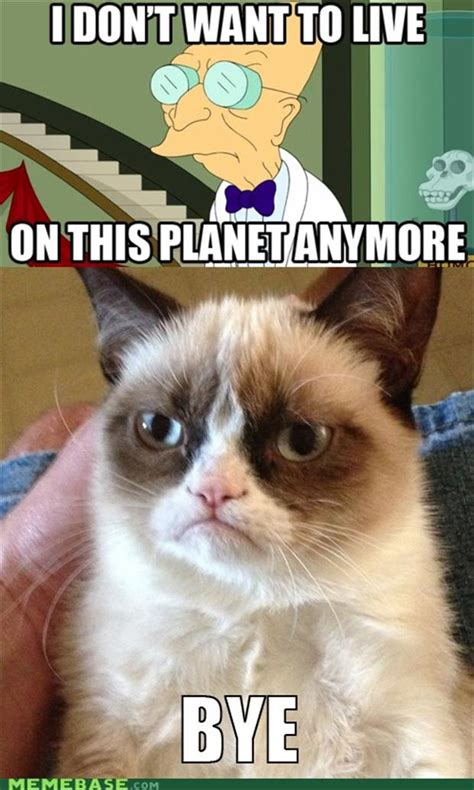 Random Cat Meme - i do not want to live on this planet anymore funny