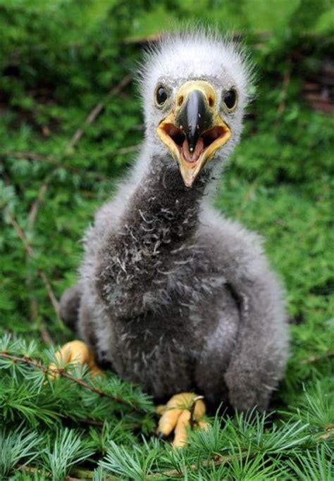 imagenes de animales jpeg hermosas imagenes de animales benito im 225 genes taringa