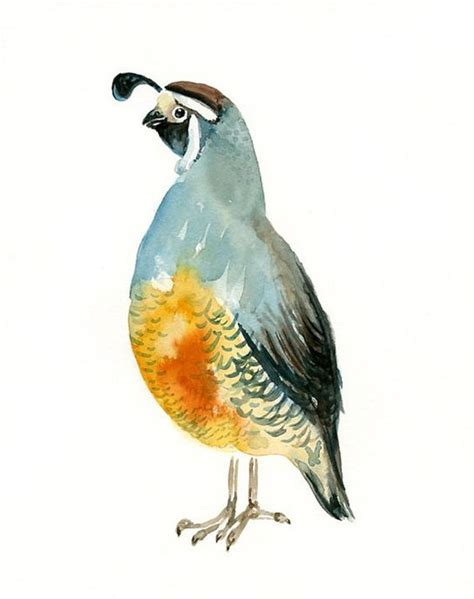 paint color quail pin by reed on home decor quails
