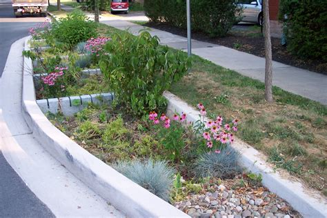 barnard street rain gardens borough of state college government